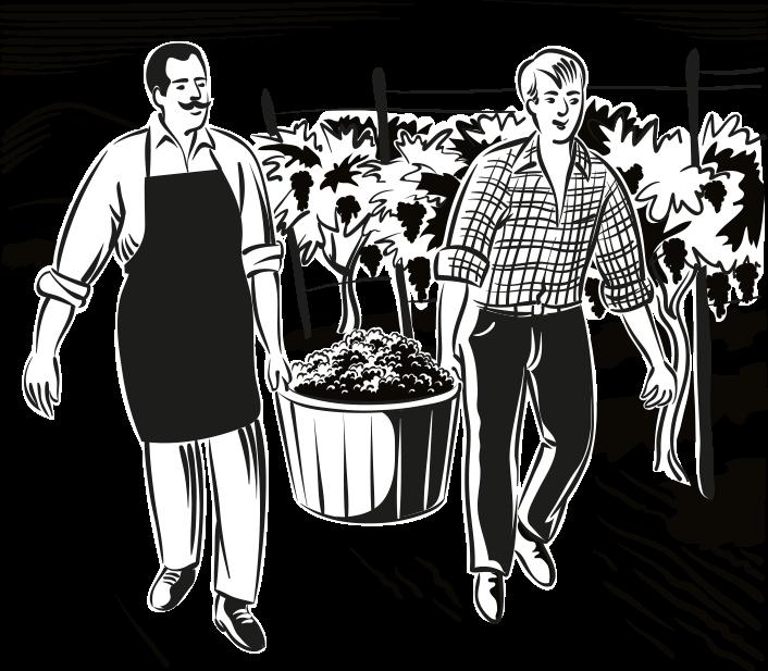 Image 葡萄种植者